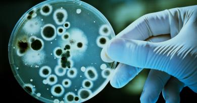 Pesquisa de egresso do mestrado em Ciências Farmacêuticas da UNIFAL-MG identifica compostos químicos inéditos que atuam contra fungos causadores de doenças