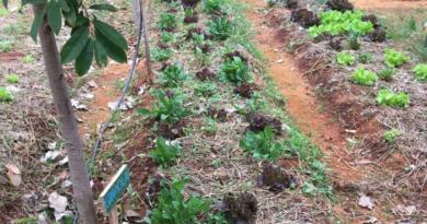 """Projeto da UNIFAL-MG integra comunidade acadêmica e externa com atividades de cultivo de hortaliças, plantas medicinais e árvores; """"Horta Terapia Comunitária"""" beneficia cerca de 30 famílias do município de Alfenas"""